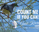 Great Kereru Count 2015