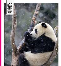 WWF's Christmas Catalogue 2013 / ©: cover image of panda © naturepl.com / Eric Baccega / WWF-Canon