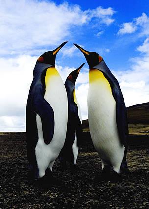 / ©:  © Wim van Passel / WWF-Canon