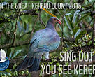 Join the Great Kererū Count!