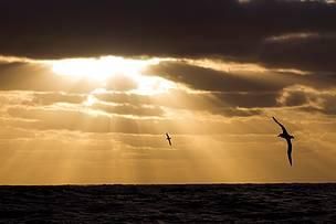 © WWF / Bob Zuur