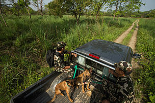 Nepalese army Kishor Rai and Suman Shrestha take Belgian Sheppards, Murray and Sears, paroling at Chitwan national park, Chitwan, Nepal. 11 May 2015.