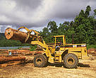 Logging pond in forest near Samarinda in East Kalimantan. Indonesia