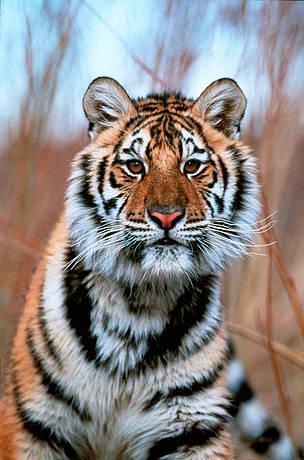 © Klein & Hubert/ WWF