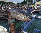 Yellow fin tuna in fish market/Philippines